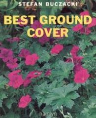 Best Ground Cover