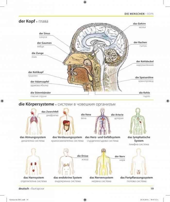 Niedlich Anatomie Und Physiologie Atmungssystem Zeitgenössisch ...