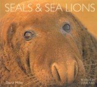 Seals & Sea Lions